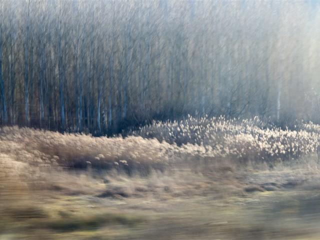 mosso alberi